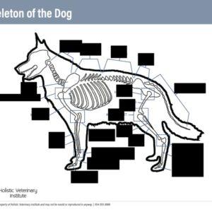 Skeleton of the dog worksheet