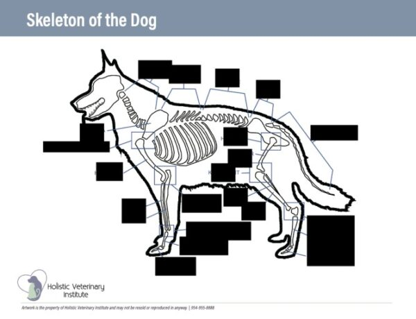 Skeleton of the dog worksheet