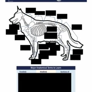 anatomical bone structure of the pet body worksheet img