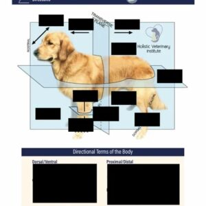 directions of the pet body handout worksheet img