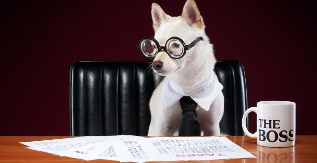 Veterinary Franchise Opportunities